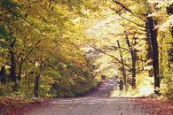 Fall in the Haliburton Highlands